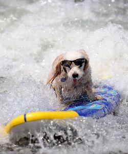 ドッグサーフィンを見る!サンディエゴ旅行の観光アイデア。