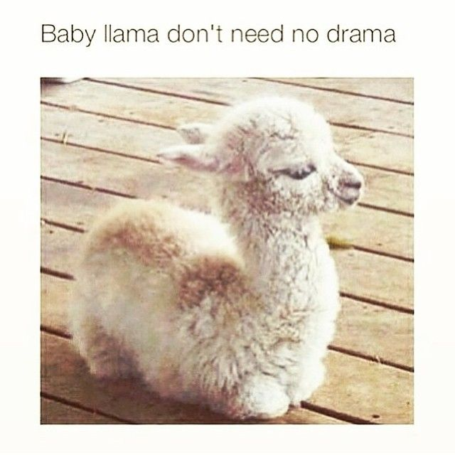 Dont Feed The Drama Llama 17 Best images about A...
