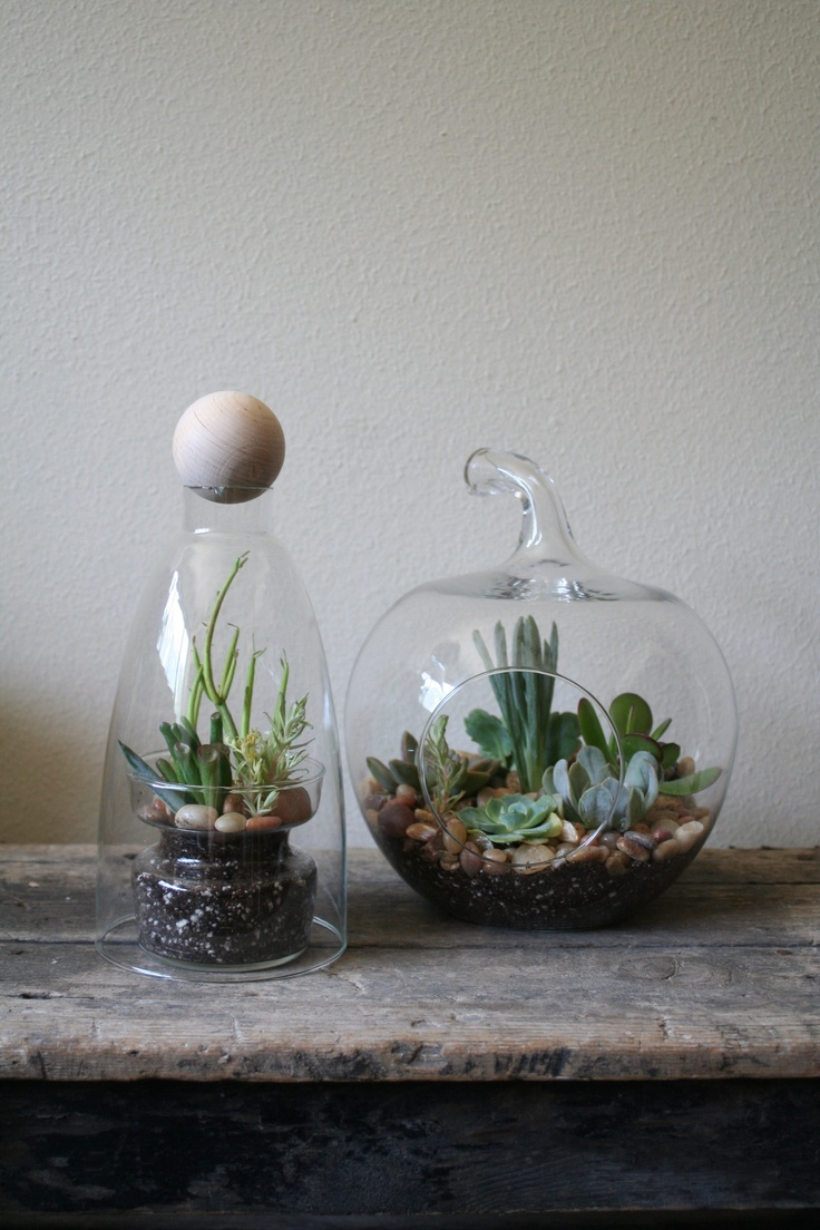 17 best images about project terrarium on pinterest beach mason jars plants for terrariums. Black Bedroom Furniture Sets. Home Design Ideas