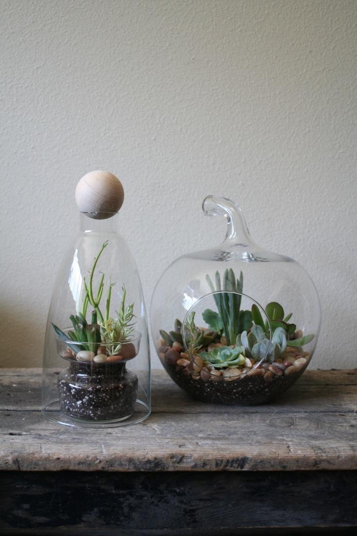 diy terrariums project terrarium pinterest. Black Bedroom Furniture Sets. Home Design Ideas