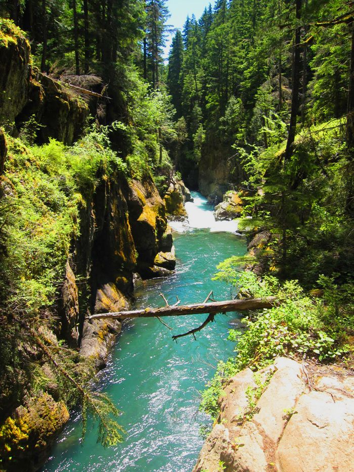 Ohanapecosh is the coolest place to camp in Washington State (IMO). Jake & I went camping there as one of our first dates <3