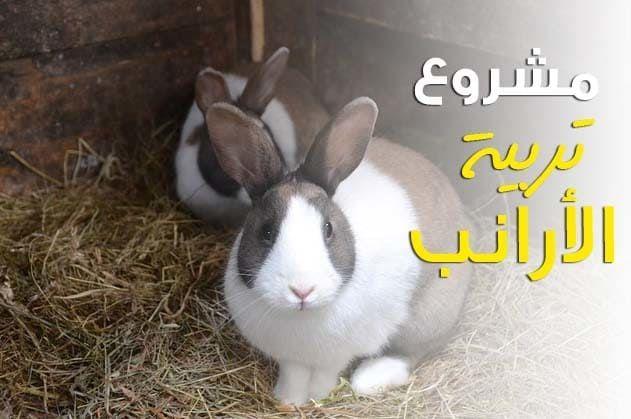 دراسة جدوى مشروع تربية الأرانب Animals Rabbit Projects