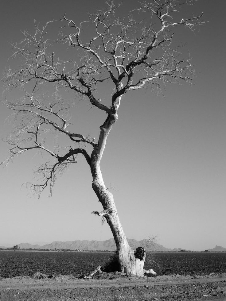 old dead trees - Google Search