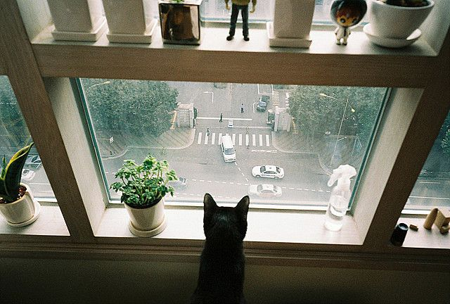 City Kitty: Cat Eye, Cities, The View, Ears, Apartment, Kittens, Window Seats, Dreams Coming True, Black Cat