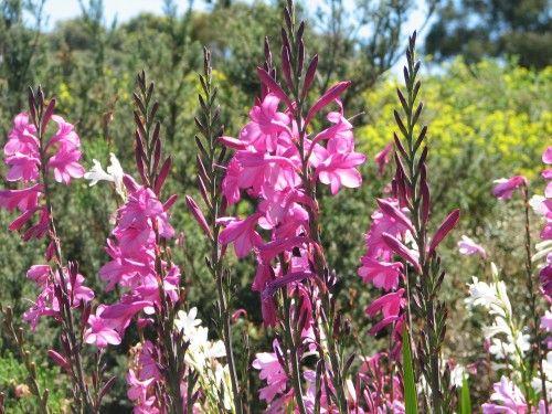Wittunga Botanic Gardens, Adelaide Hills, South Australia - Trevor's Travels
