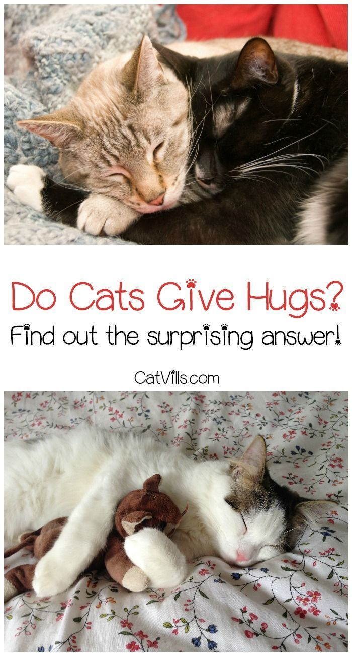 Cat Behavior Explained Do Cats Give Hugs Catvills Cat Behavior Cats Cat Hug