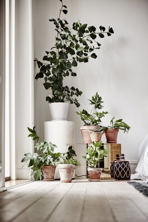 Plants in Terracotta pots in a serene small space apartment in Sweden