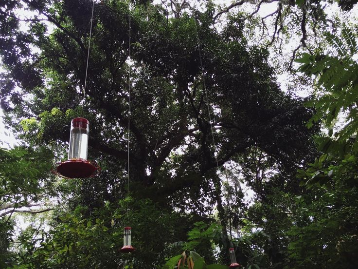 A snapshot of the view of our might jungle featuring the hummingbird feeders.