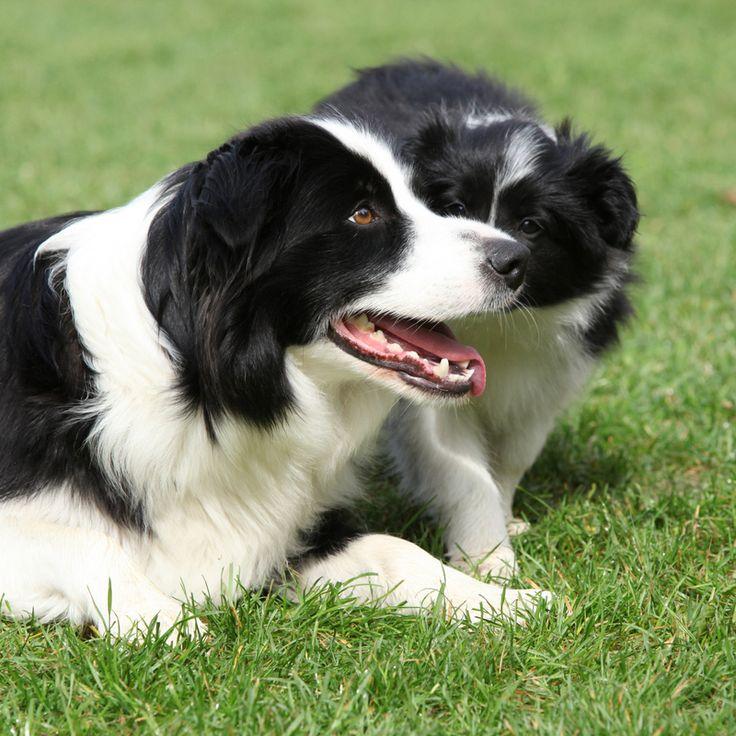 Hund med hvalp