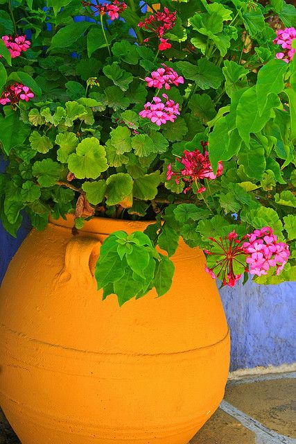 "Pot of flowers by Marite2007, via Flickr.    ""Closeup view of a clay pot filled with geranium, Leros island, Dodecanese, Greece."""