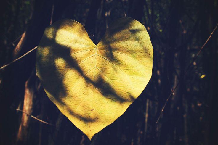 """""""Prendre sa place,c'est créer sa propre forme et surtout s'exprimer à travers elle. C'est devenir son propre créateur..."""" #vulnérabilité #coeur #essence"""