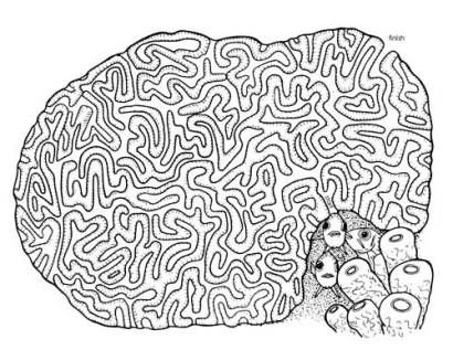 printable brain coral maze and coloring sheet - Coral Coloring Pages