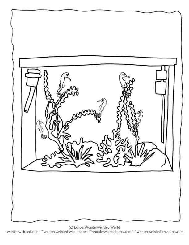 Marine Aquarium Coloring Pages From Pets Collection Empty Tank Outlines To Filled Tropical Fishes Aquariums Color At
