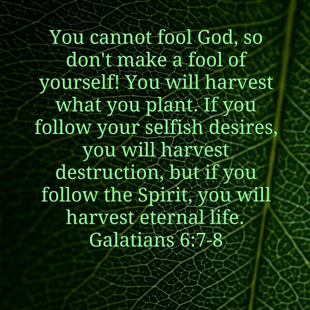 Galatians 6:7-8 what you sow you reap