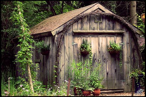 cute little garden shed - I love rustic, I can't help myself.  It gives me a warm fuzzy feeling.  Country Comforts!