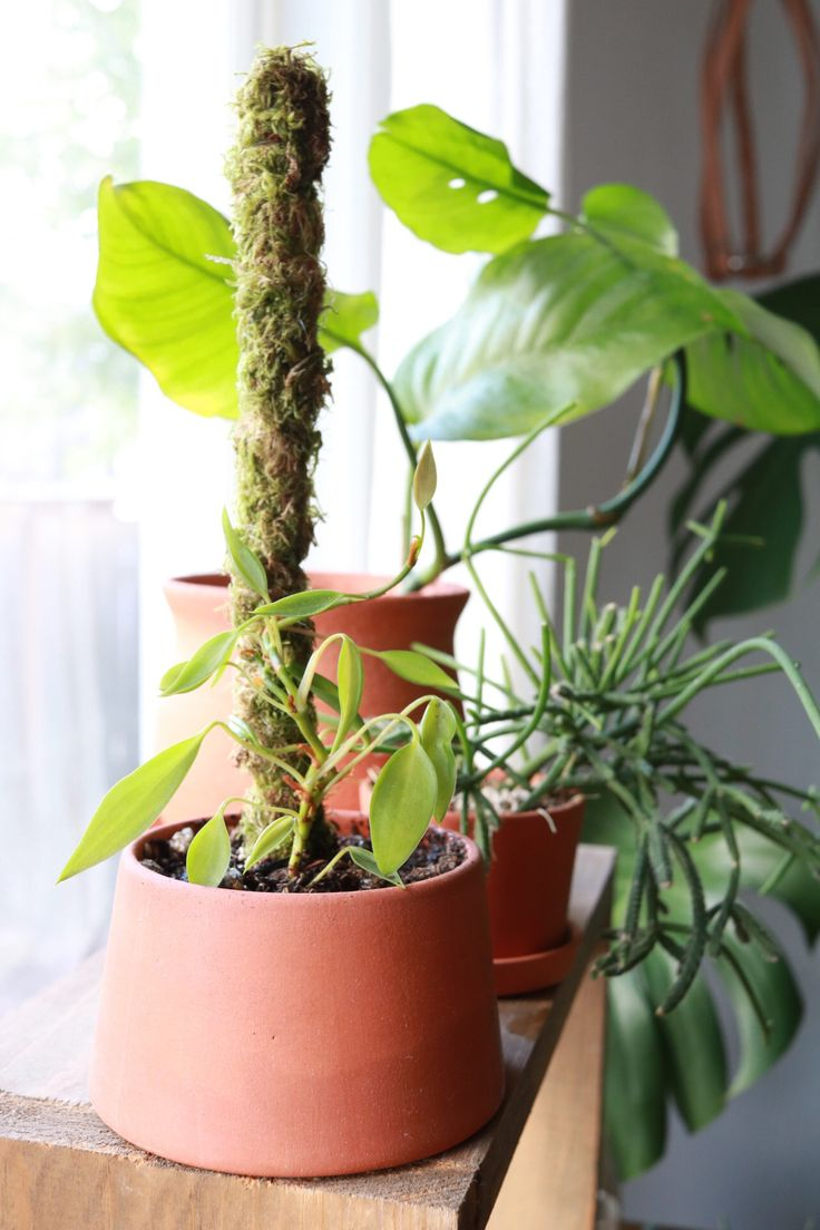 How to make a mini moss pole for your plants plants