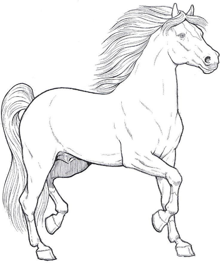 161 best images about horse drawings on pinterest dovers for Immagini di cavalli da disegnare