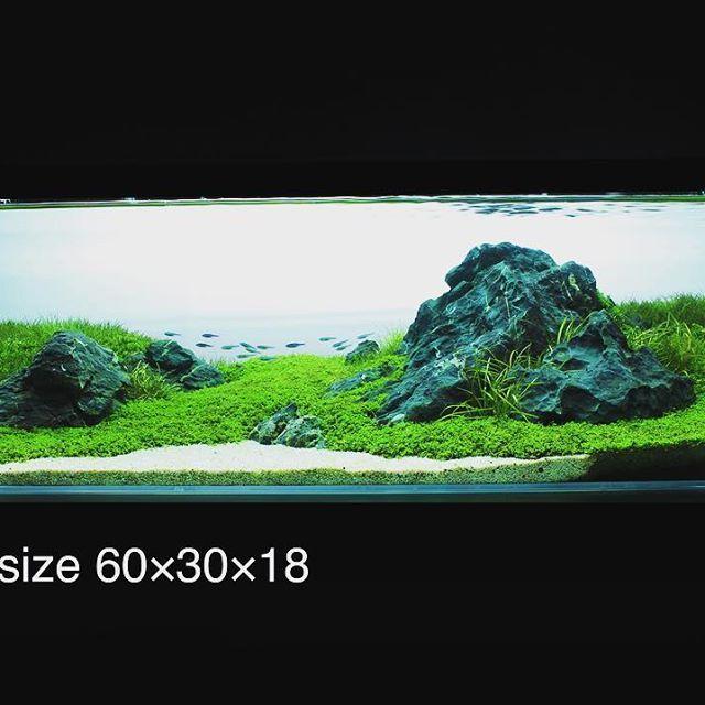 【pet_maruyama】さんのInstagramをピンしています。 《2015年制作の60F水槽です。 #アクアリウムショップ #アクアリウム #水草水槽 #ネイチャーアクアリウム #水草レイアウト #熱帯魚 #ADA #ADA特約店 #水草 #水槽レイアウト #アクアデザインアマノ #aquadesignamano #aquascape #aquaticplants #plantedtank #plantedaquarium#solarrgb#NatureAquarium#glossostigma#aquaplants#aquascaping#大田原 #ペットマルヤマ #栃木》