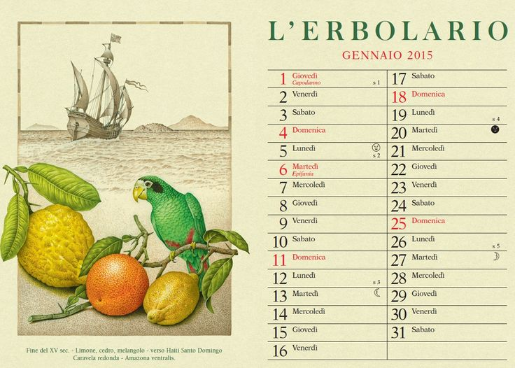 Limone, cedro, melangolo - verso Haiti, Santo Domingo  Caravela redonda - Amazona ventralis