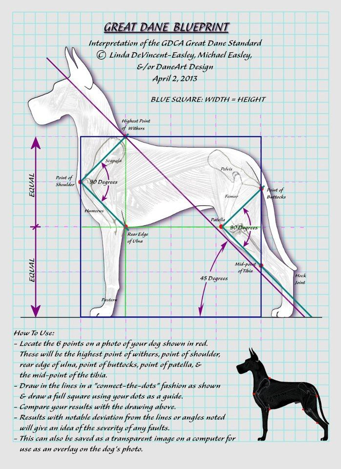 Great Dane standard. Wish there were more of these for other breeds!