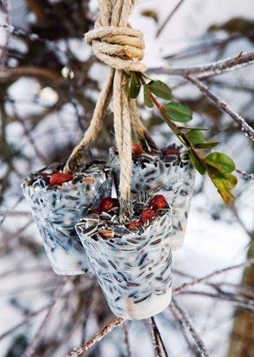DIY- Seed cups for the birds. . . . .Suet, sunflower seeds, cranberries, rope, and a couple Dixie cups!