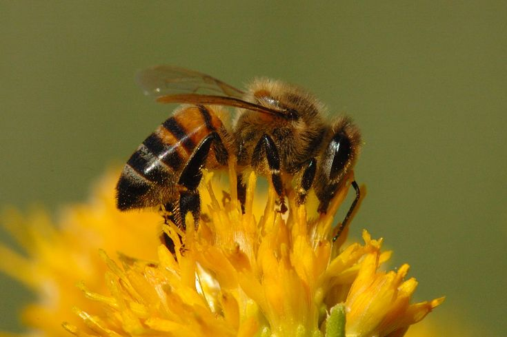 17 Best Images About Bees Etc On Pinterest