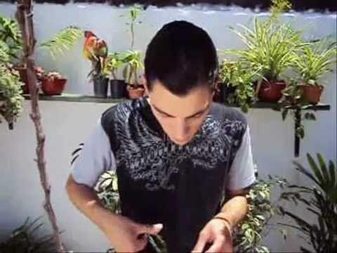 Cómo podar un bonsái http://ini.es/ZbTdqo #Consejos, #Jardín, #VideoDecoracion
