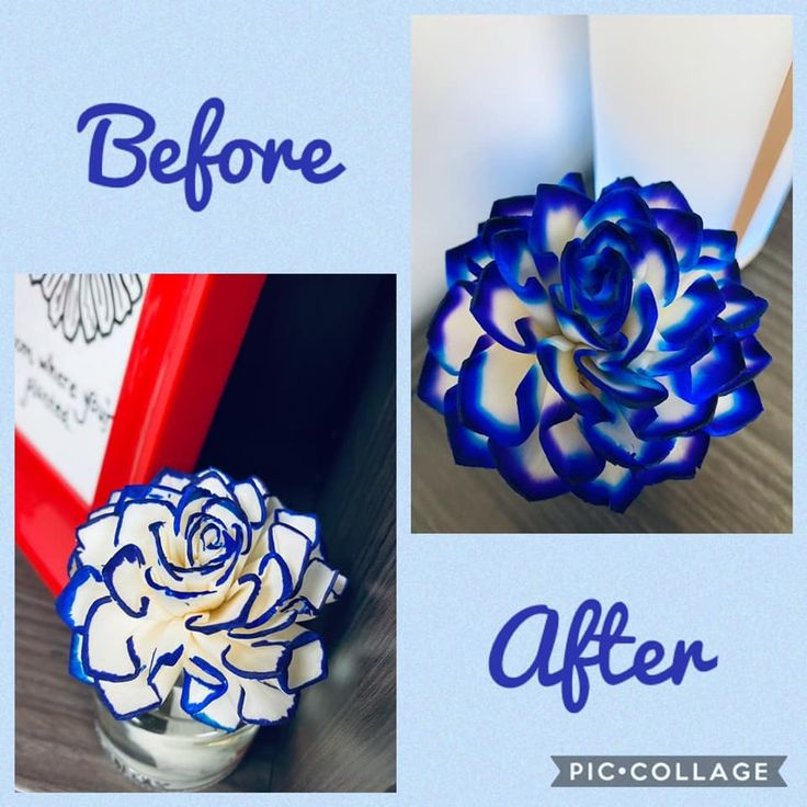 Pin by Sarah Thompson on Coloring party in 2020 Scentsy