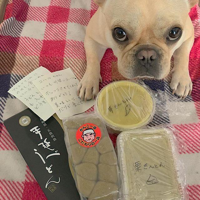 インスタで知り合ったハルママ @haruharu12311015 からコハルにプレゼントが届いたー😍🎁 . いつも美味しそうな料理と海の幸とお菓子に冗談で送ってーとコメントしてたら、本当に送ってくれて何かすんません😅💦 . フレブルのコハルとダックスのハル🐶💗 ハル繋がり🌸✨ 福岡と長崎五島で出会うはずないのに不思議な縁だなぁ〜☺️✨ . 小春を通じてたくさんの人との繋がりができて嬉しい😊  小春パワースゴい🐷✨✨ . そんな小春は「これ全部アタシのだかんね‼️」って反抗的な目で訴えております🤣 . #フレンチブルドッグ#フレブル#フレブルクリーム#ブヒ#犬バカ部#愛犬#いぬすたぐらむ#犬のいる暮らし#frenchbulldog#dog#dogstagram#instadog#present#インスタすげー#栗きんとん#芋きんとん#かんころもち#五島うどん#クレクレ星人
