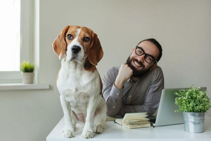 """Das #Burnout-Syndrom wird immer mehr zum Massenproblem. Jetzt scheint die Lösung ganz einfach: #Hunde im #Büro können bei der Burnout-Prävention helfen und Experten raten jedem Unternehmen zu einer """"Dog Policy"""". http://arbeits-abc.de/hunde-als-burnout-praevention-im-buero/"""