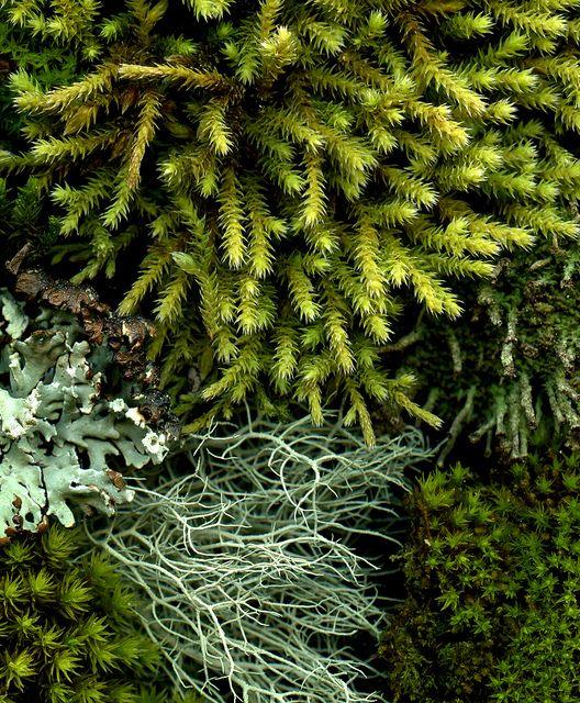 moss&lichen