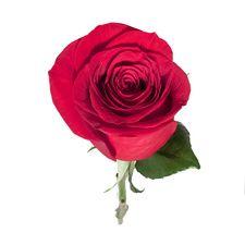 Rose Delivery Service | Ode à la ROSE | AHAlife