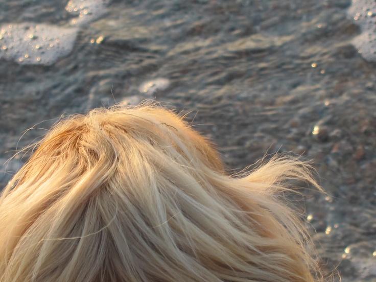 Hund og hav  Copyright ©Katjagry Media 2012