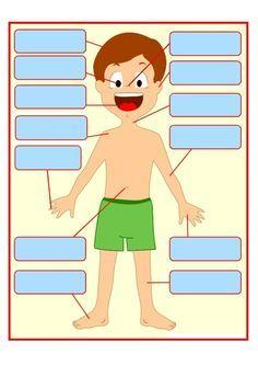 Gabarit 1 - Les parties du corps humain à placer                                                                                                                                                                                 Plus