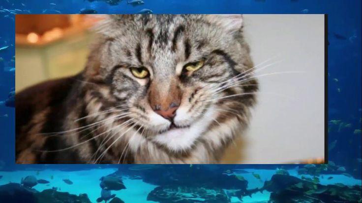 Супер шкодные коты