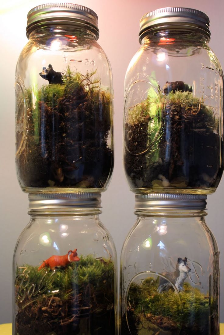 Great for teaching ecosystems. OR a great project for habitats. Give each student an animal and have them recreate the habitat.