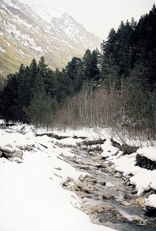 Taiga...winter