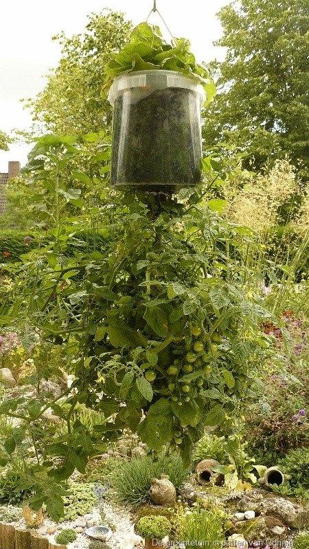 25 beste idee n over bloemen kweken op pinterest kruiden kweken groenten tuinieren en - Groenten in potten op balkons ...