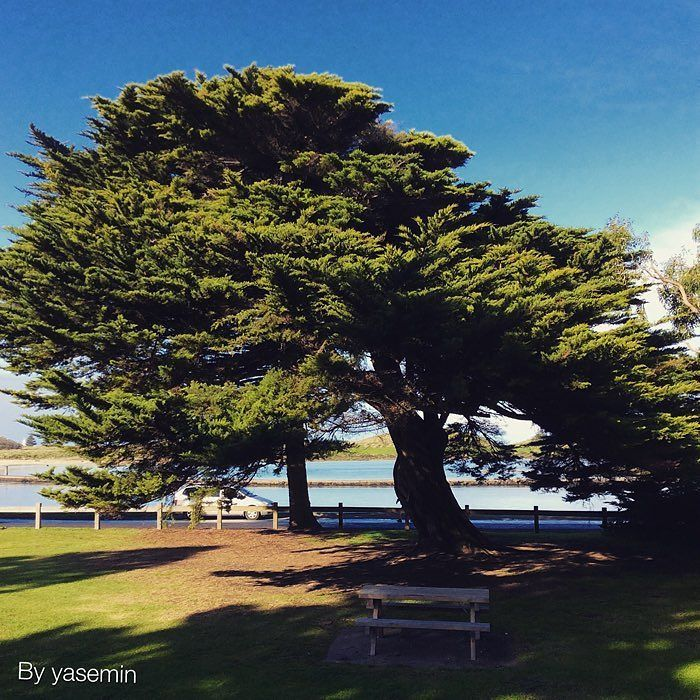 Tree at martins point #tree #summer #portfairy #shadow by photos_with_meanings