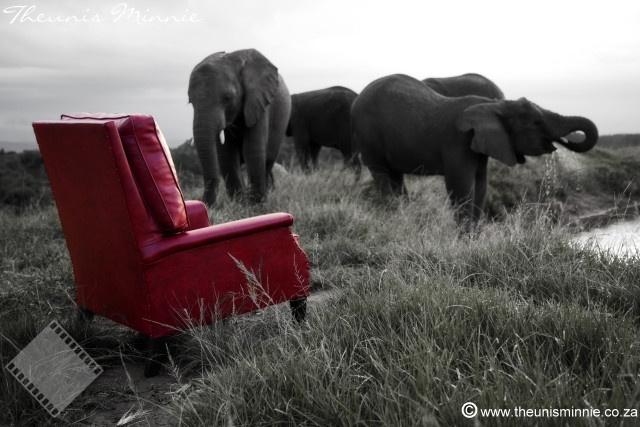 knysna elephant park.jpg