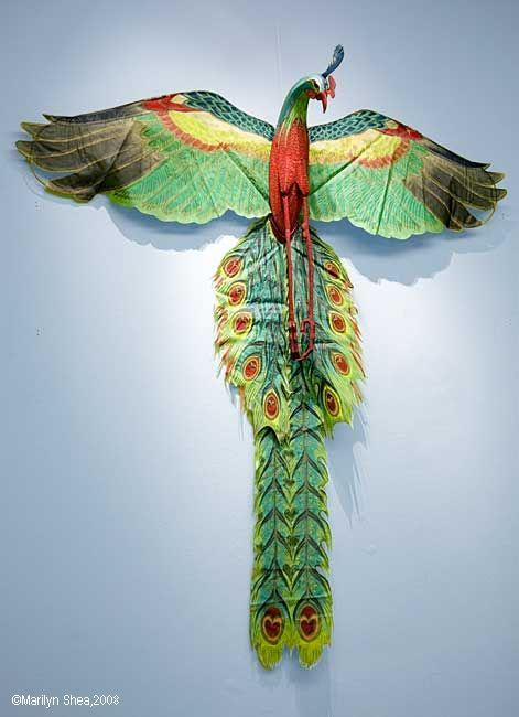 chinese kite - peacocks gotta fly!