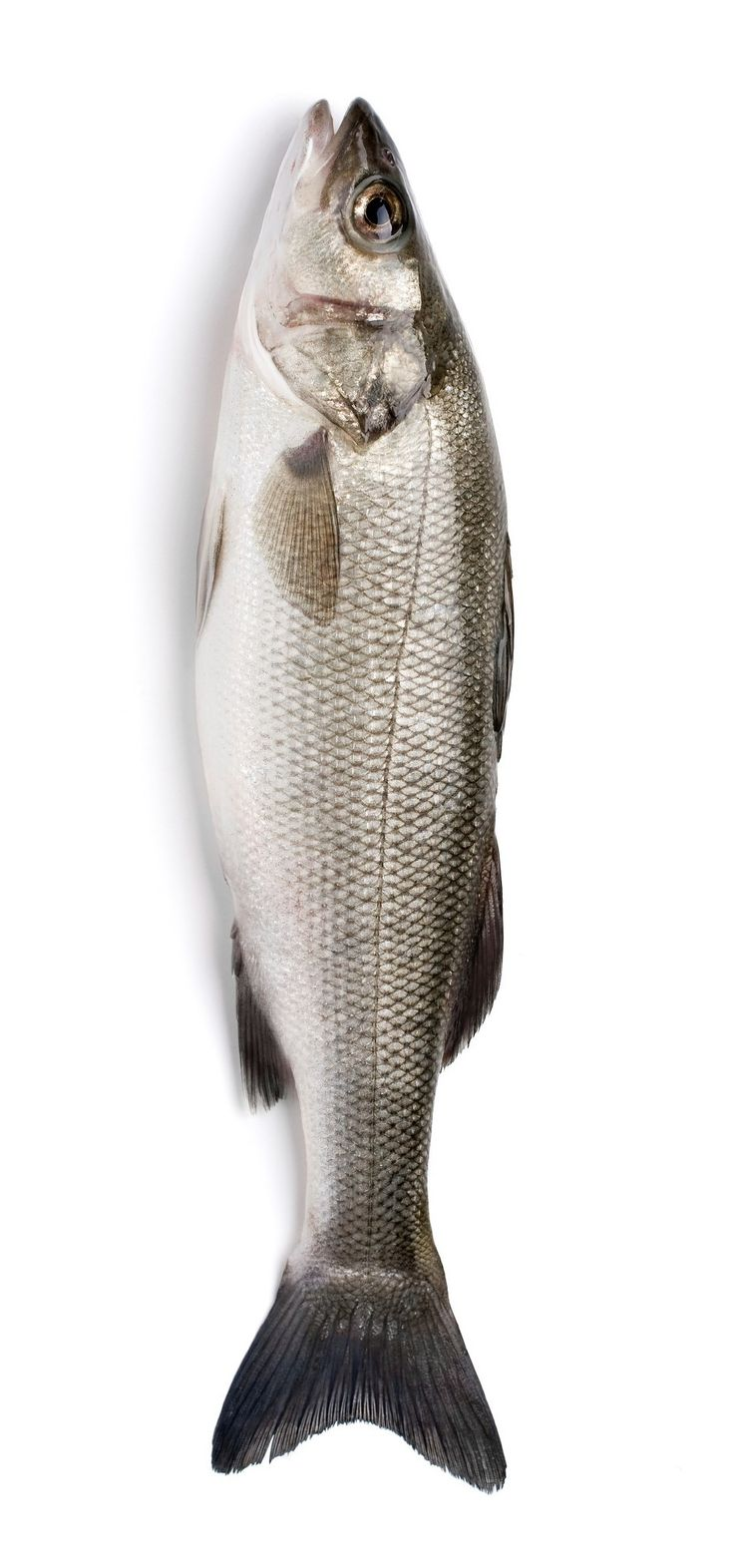 17 best images about the art of eating on pinterest for What is branzino fish