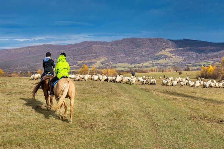 Calare in Colinele Transilvaniei, cu Equus Silvania, Șinca Nouă