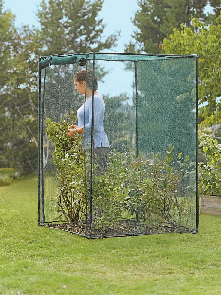 you could easily make one of these cages.....Crop Cage, 4' x 4' x 6' Tall | Blueberry Bush Cover | Crop Protection