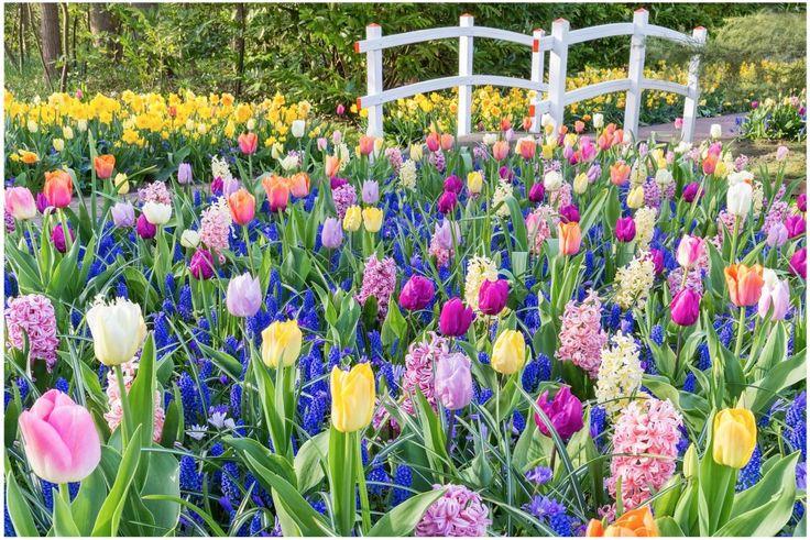 Plantera lökar i lager och får vårens maffigaste blomsterodling