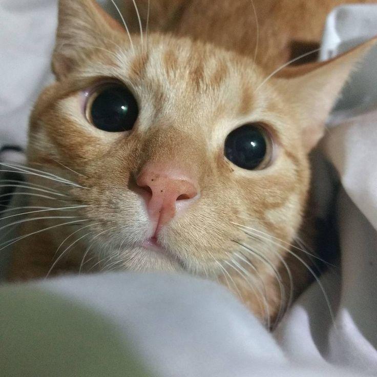 "2 Likes, 1 Comments - Loki (@soyelgatololo) on Instagram: ""La gente me dice que me parezco al gato con botas. Meww"""
