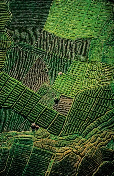 cratered: Rice fields (the Jyapu of Nepal),...