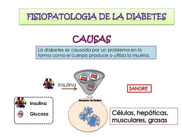 En la diabetes mellitus tipo las células no reaccionan a la insulina, por eso la glucosa no puede entrar a la célula y se ...