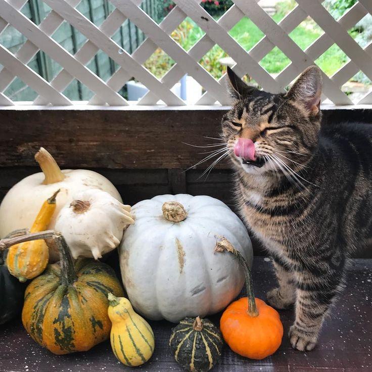 Pegs knows that pumpkins mean PIE