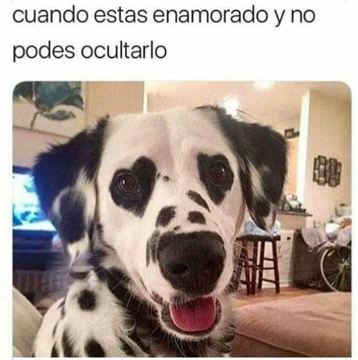 Pin By Ana Chavez On Spanish Memes Cute Baby Animals Cute Animals Beautiful Dogs